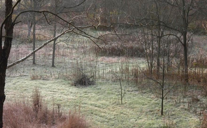 Deer Field, 4:54, Jamie Hahn, 2010, still from single channel video