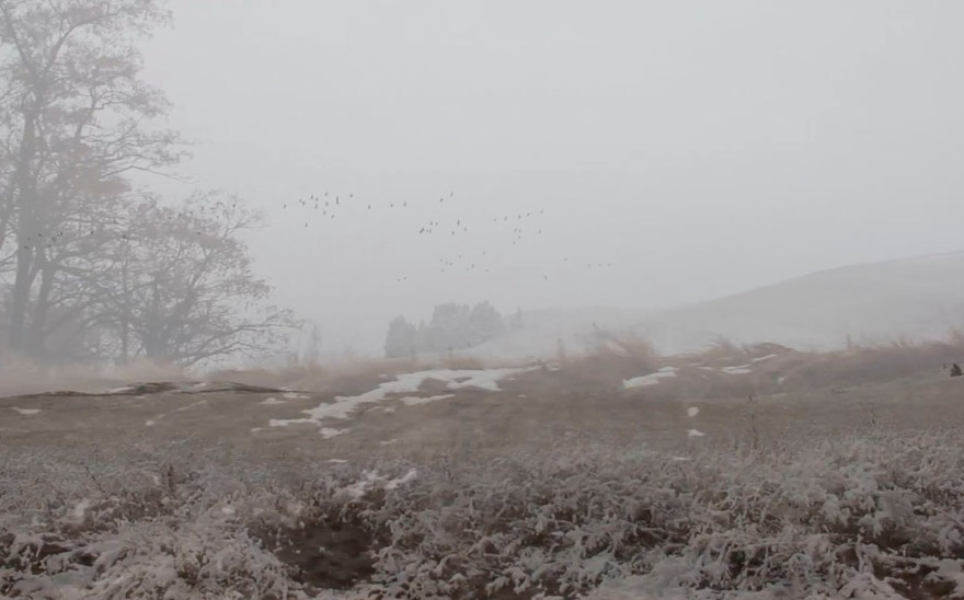 The Field, The Geese & The Oak Trees, 15:19, Jamie Hahn, 2016, still from single channel video